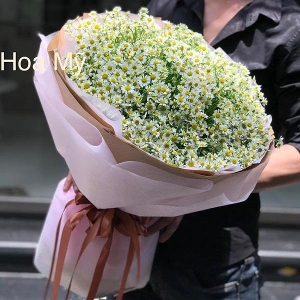 hoa cúc tana Hà Lan