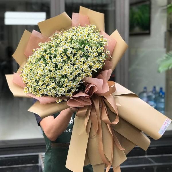 hoa cúc tana giá