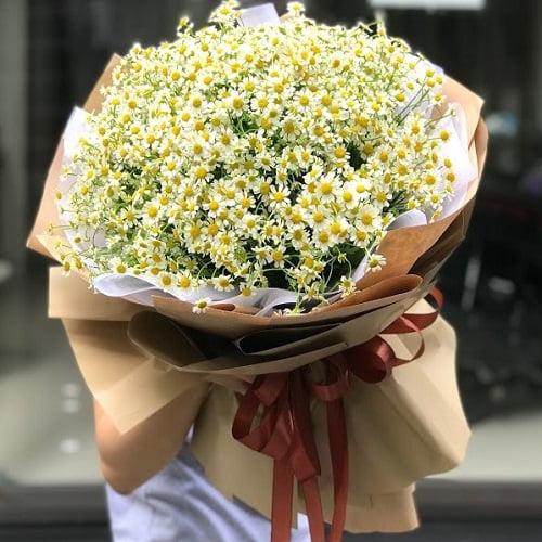 hoa cúc tana đẹp
