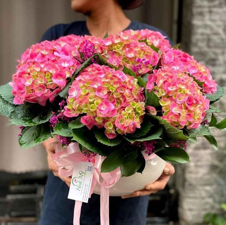 chậu hoa cẩm tú cầu