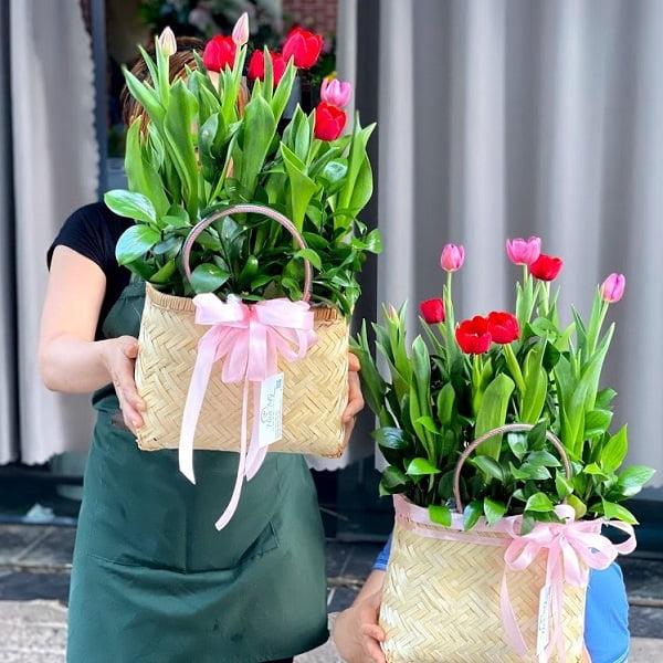 bó hoa tu lip